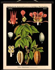 Lehrtafel-Vintage-Echter-Kakaobaum-Schwarz