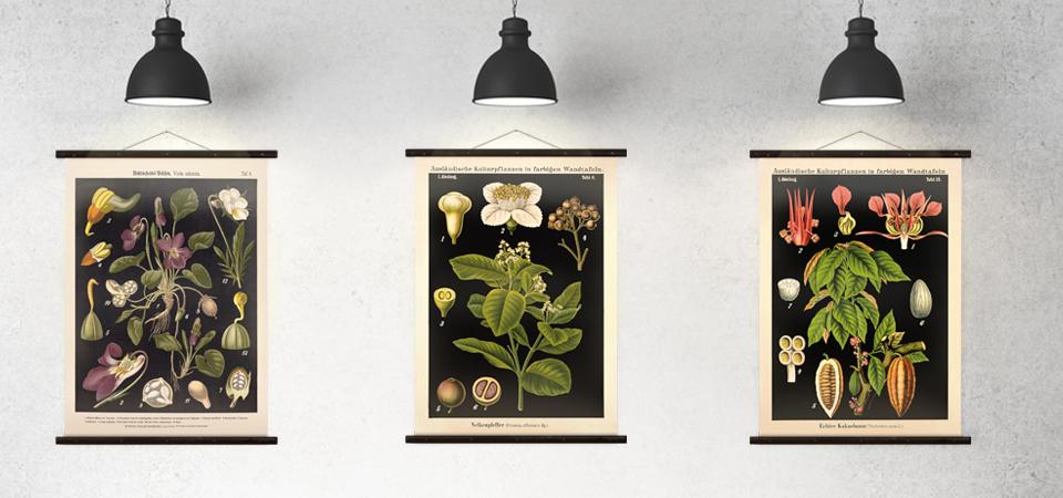 Wandschmuck_Botanische-Lehrtafeln